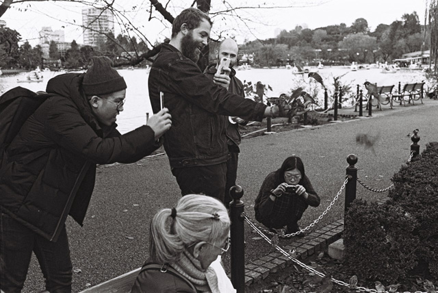 Парк Уено. Токио. Туристы наблюдают за кормлением стаи воробьев