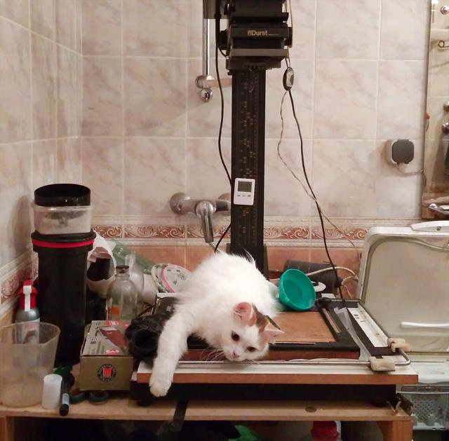 Котик и фотоувеличитель Durst