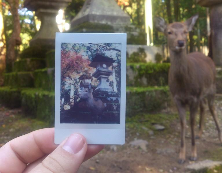 Japan deer nara instax mini