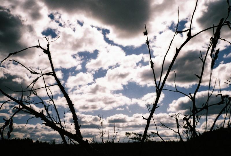 ветки сухого дерева на фоне яркого облачного летнего неба