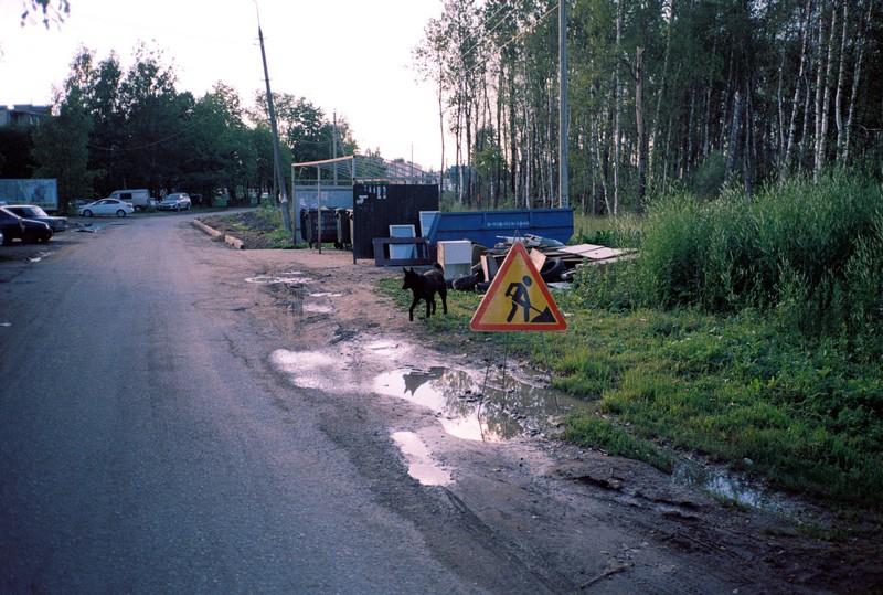 знак дорожных работ, черный пес отражается в луже. Слева изображена дорога с разбитой обочиной, а справа лесной массив