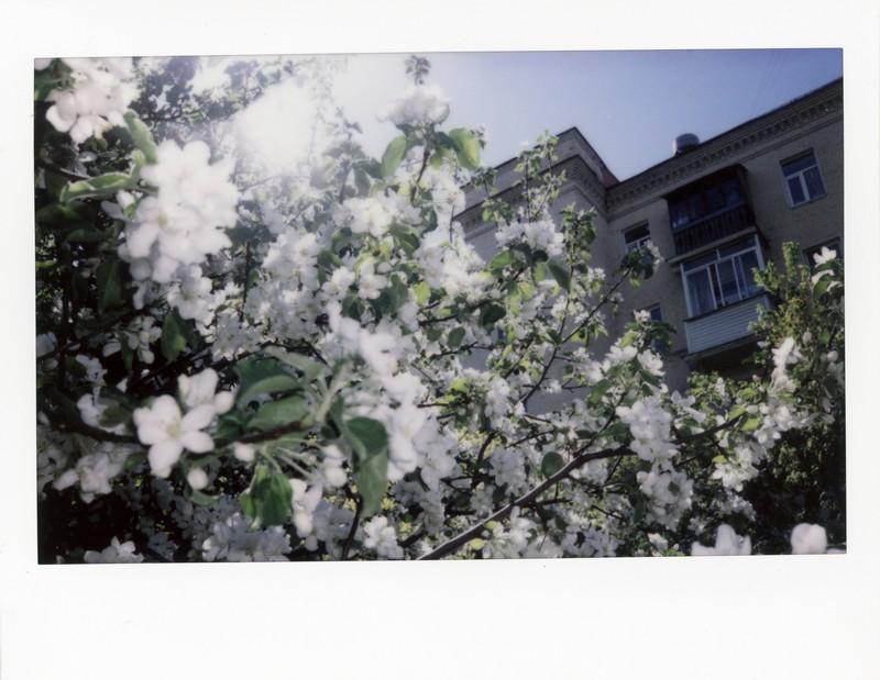 Fujifilm Instax Wide 300. Цветение яблонь в районе Лужников