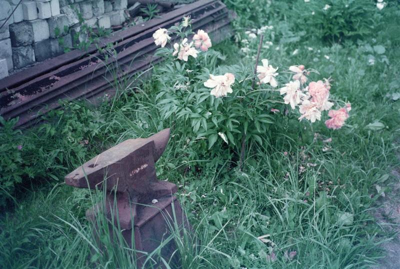 железная ржавая наковальня рядом с декоративными цветами