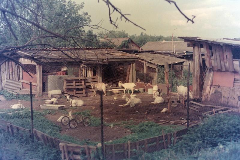 Двор с козами на выезде из города Коломна по улице Октябрьской Революции