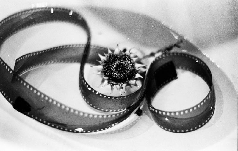 Натюрморт с пустой пленкой и засохшим цветком