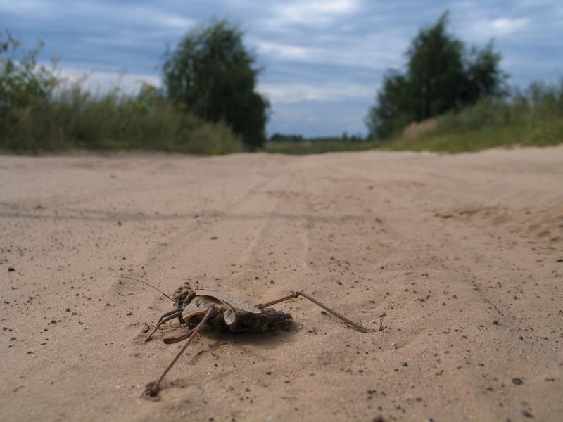 Песчаная дорога в Завидово