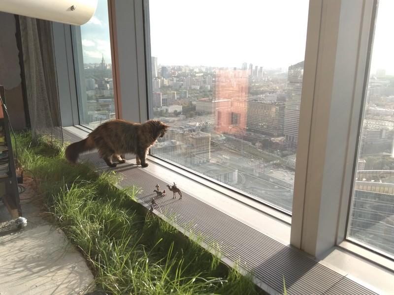 Кот смотрит вниз в окно с одной из башен Москва-Сити