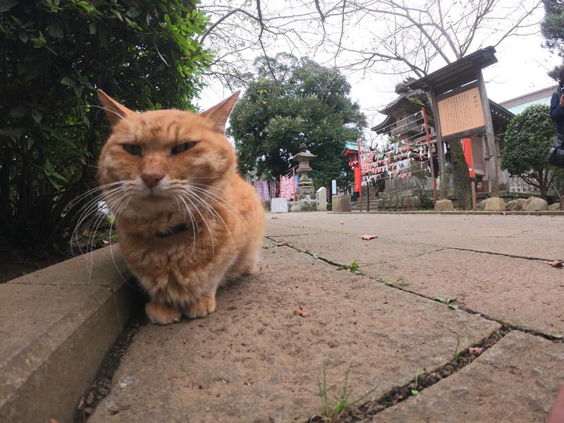 эношима - остров котиков