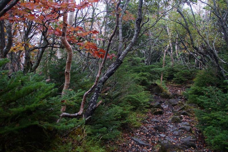Тропа Есида ведущая к 5 станции горы Фудзи