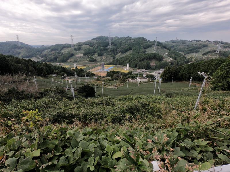 Чайные плантации Авагатаке, Сидзуока (Awagatake, shizuoka)