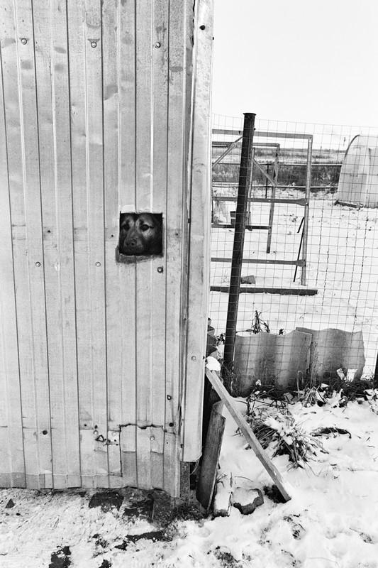 Пёс смотрит на нас через квадратное окно в гофролисте.