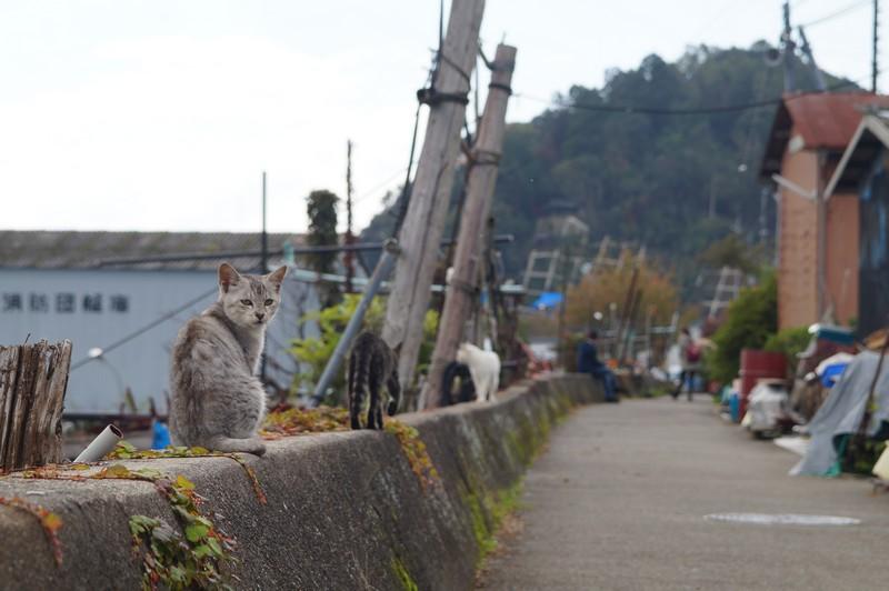 Достояние острова Окишима - котики