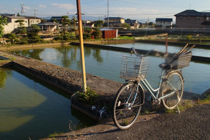 ферма по разведению золотых рыбок в Японии