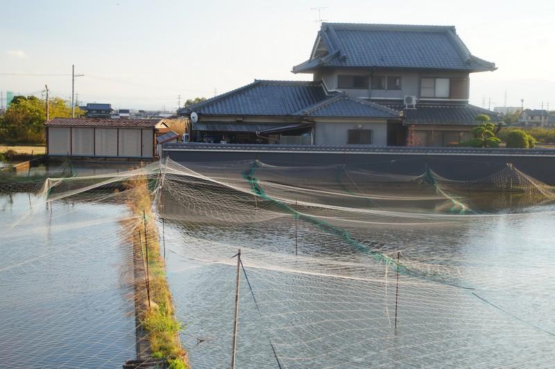Вид на ферму по разведению золотых рыбок