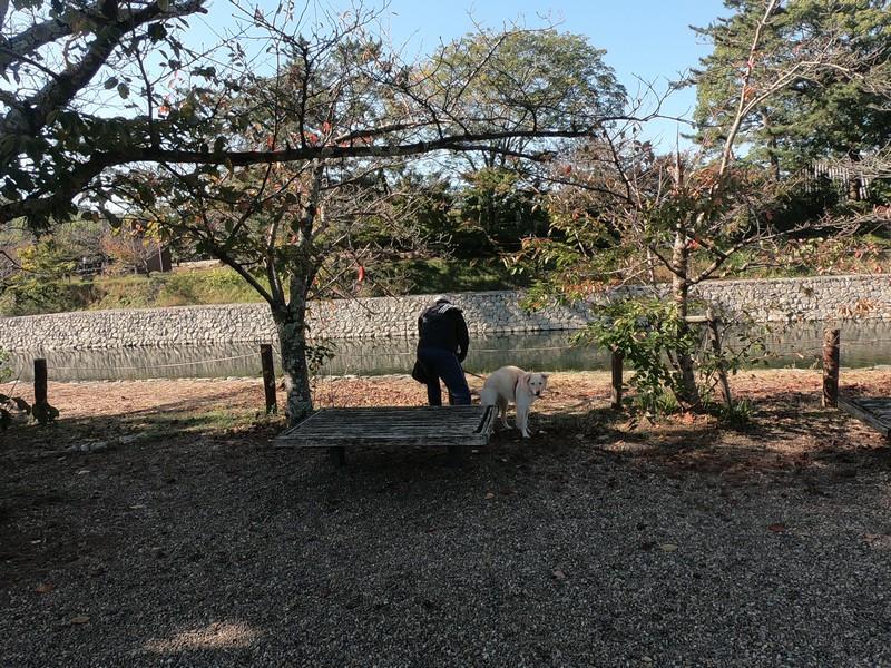 Собака с владельцем гуляют вдоль реки Удзи, префектура Киото