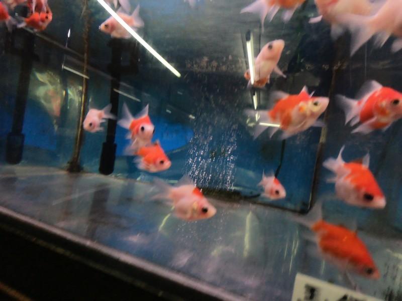 Зоомагазин с золотыми рыбками города Яматокорияма, Нара, Япония