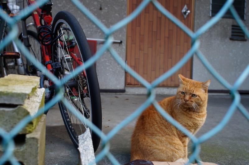 Профессор кот района Аракава