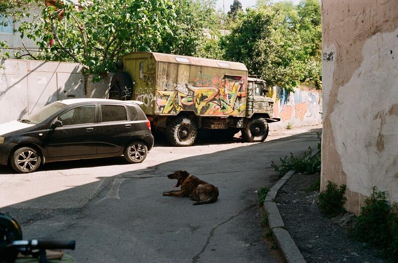 Собака и машины на проезжей части города Ялта