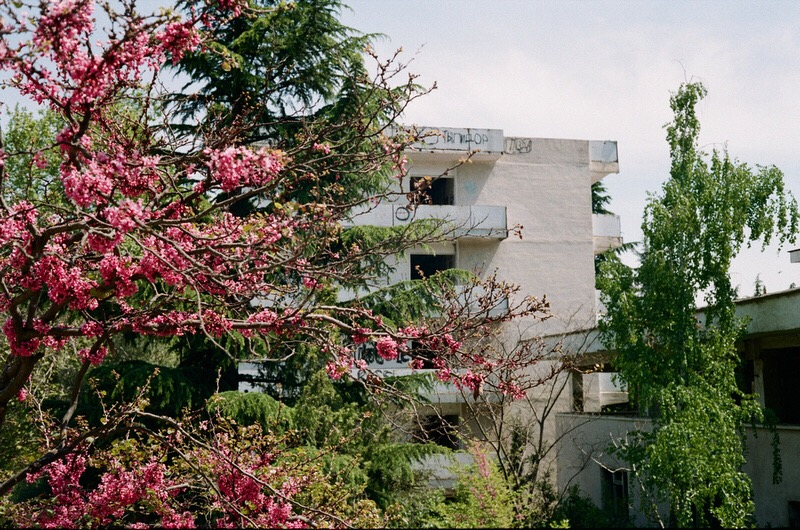 Недействующие санатории в Крыму на фоне цветущих деревьев