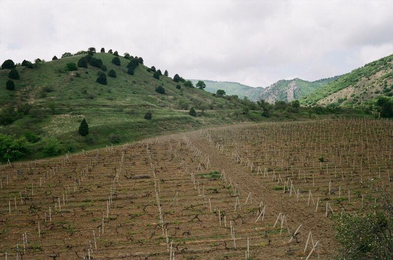 Крымские виноградники в горах близ Алушты