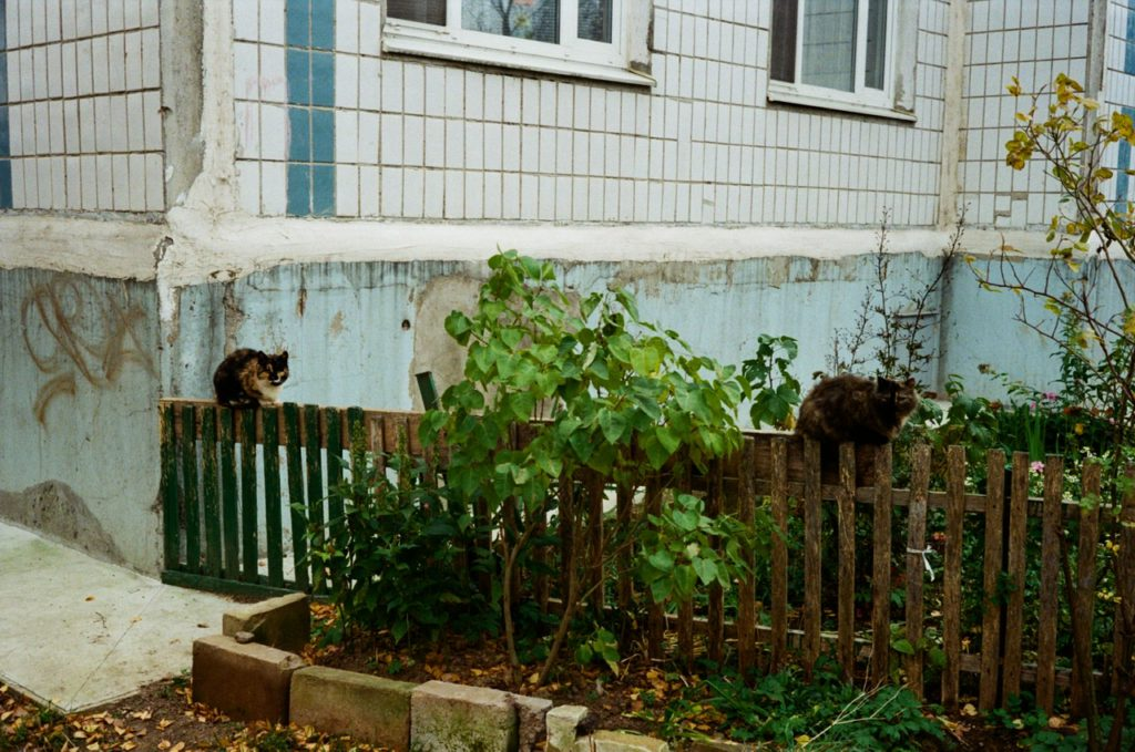 Солнечногорск. Коты с улицы Ленина.