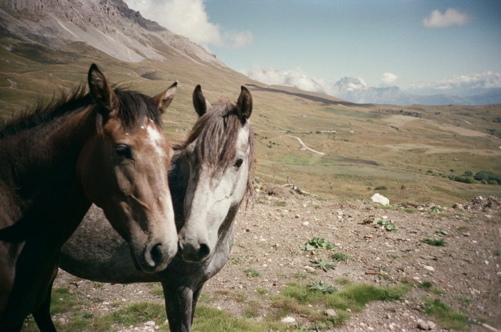 Две лошади. Куртатинское ущелье, Северная Осетия - Алания. Lomo LC-A, кинопленка Kodak